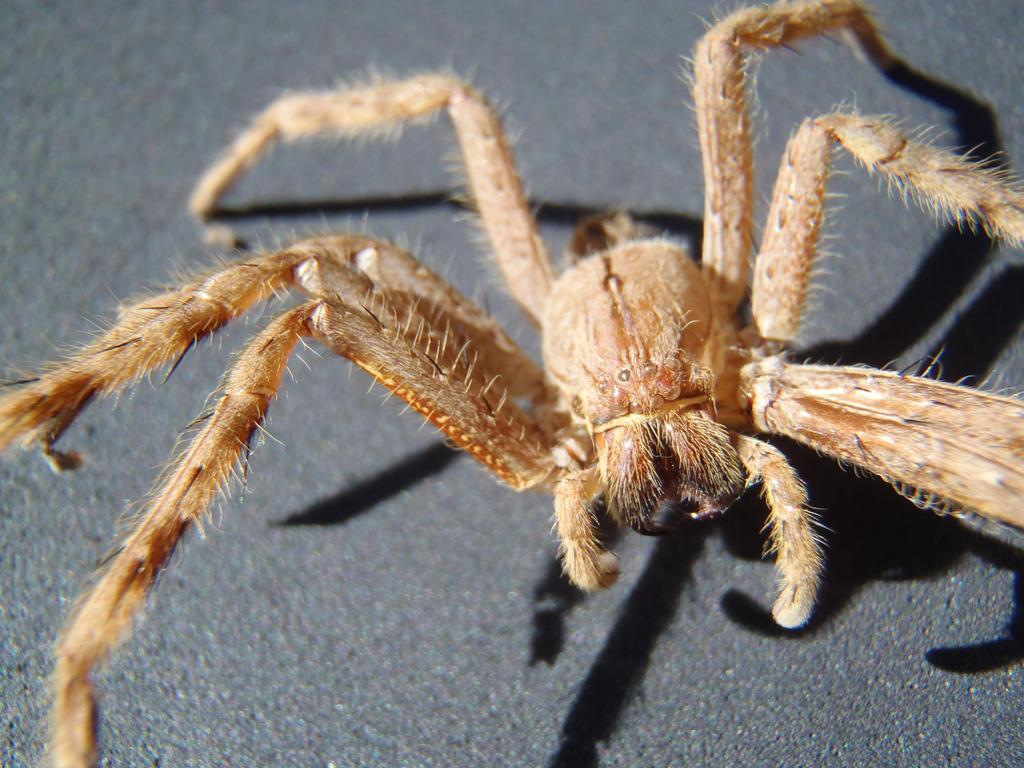 Exoskeleton - Wikipedia |Examples Of Exoskeleton Animals