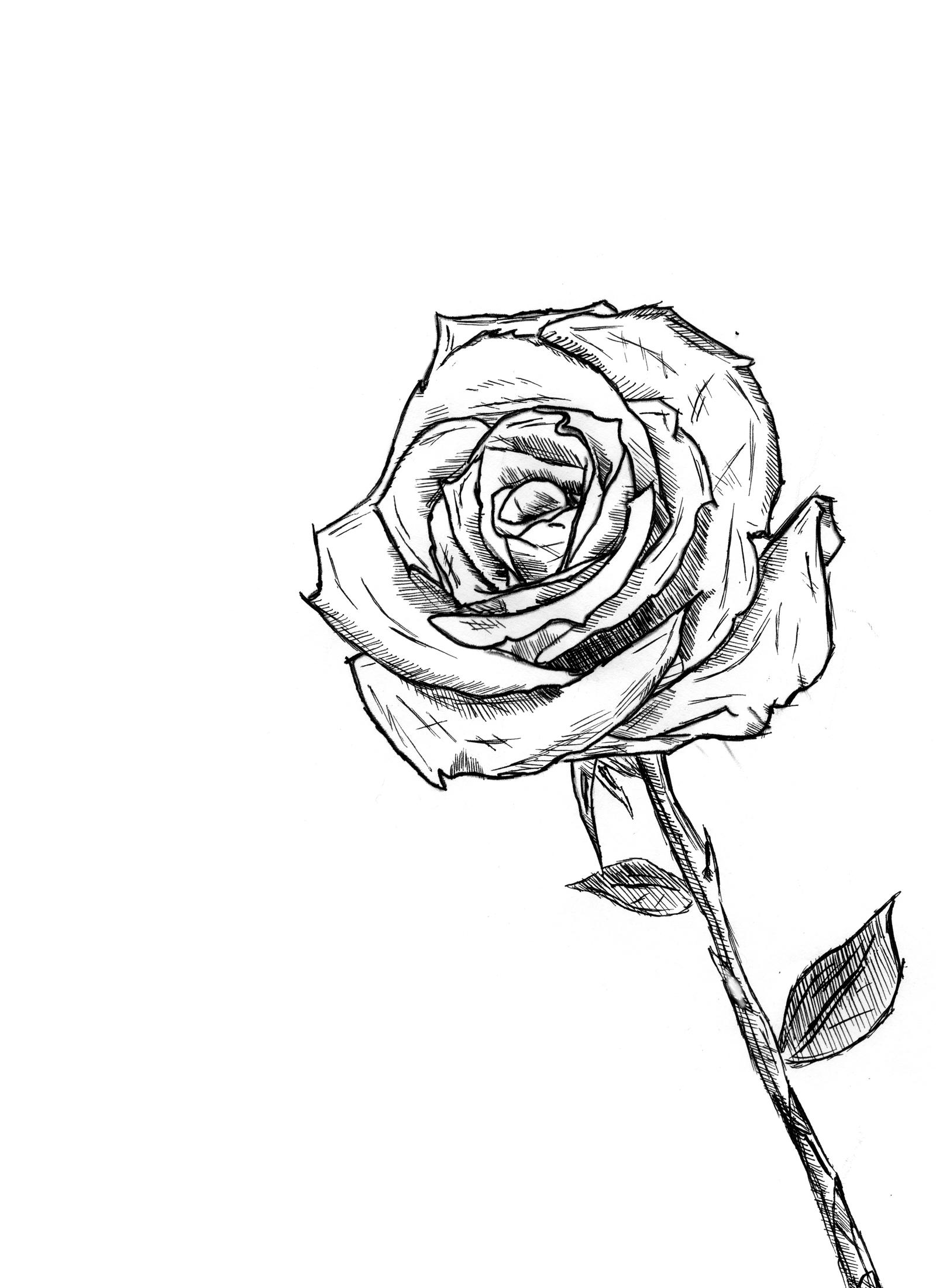 how to draw a quick rose
