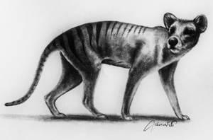 Thylacine drawing by CherishArt