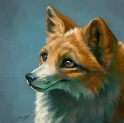 Fox Dog -commission