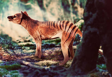 Forest Thylacine