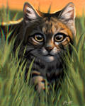 Black-footed Cat
