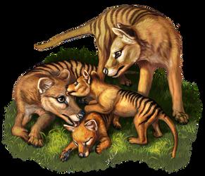 Thylacine Family