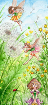 Fairy Meadow