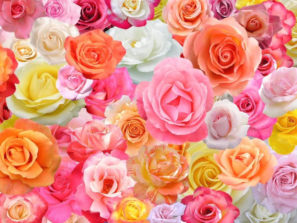 60 Roses by TNBrat