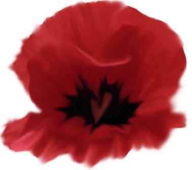 The Love Poppy by Lichlore