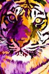 New tiger closeup