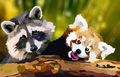 Baby racoon and red panda