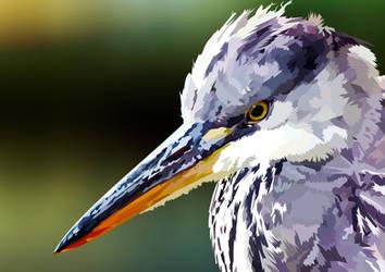 Gray Egret vector by elviraNL