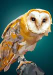 Barn Owl vector