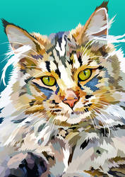 Beautiful long haired cat - Vector