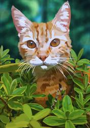 Bush Cat  - Fender