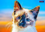 Pretty blue eyed kitten