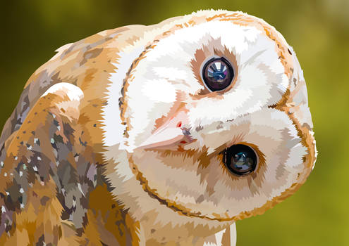 Owl - What are you doing?
