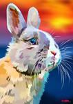 Sunset Bunny
