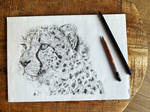 Traditional drawing - Cheetah Finished