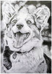 Happy Dog Traditional Drawing