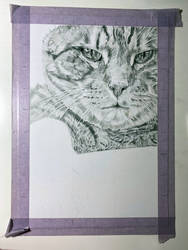 Traditional drawing - Cat - WIP 2 - Commissioned