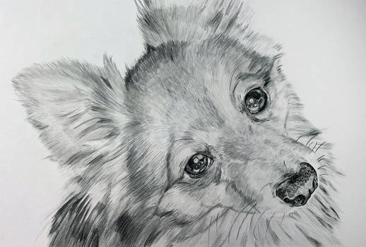 Traditional drawing - Doggie - Finished
