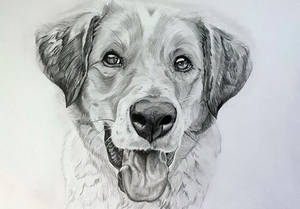 Drawing - Dog commission finished