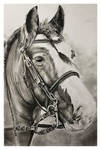 Charcoal drawing - Horse - Finished