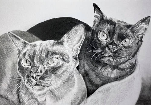 Traditional artwork - two cats - commission