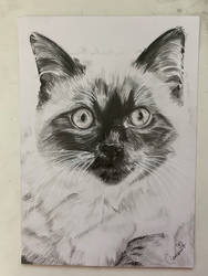 A5 cat drawing