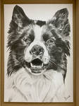 Border collie drawing A5