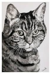 Charcoal drawing - cat Karel