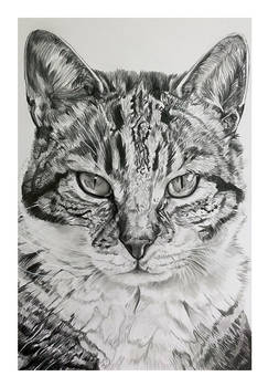 Cat drawing - Commissioned
