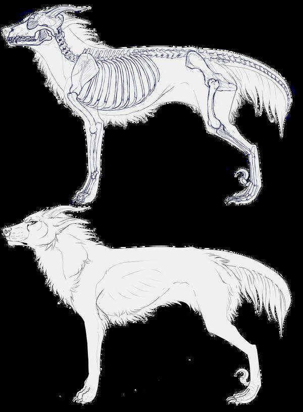 Anatomy Sheet for Arcanus species by Velkss