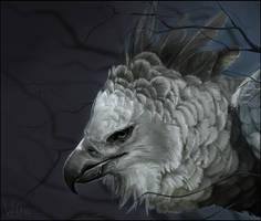 Harpy by Velkss