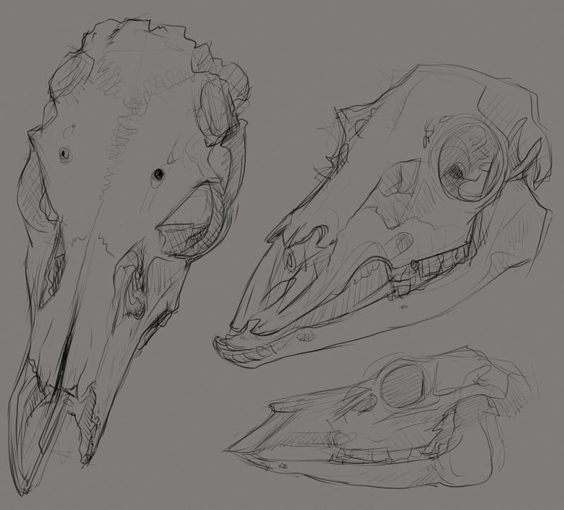 Deer Skull Practice by Velkss on DeviantArt