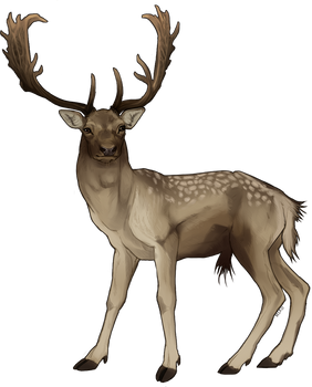 Fallow deer [STUDY]
