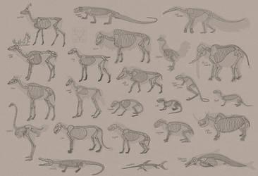 Skeleton Studies (update 4) [SUGGEST AN ANIMAL]