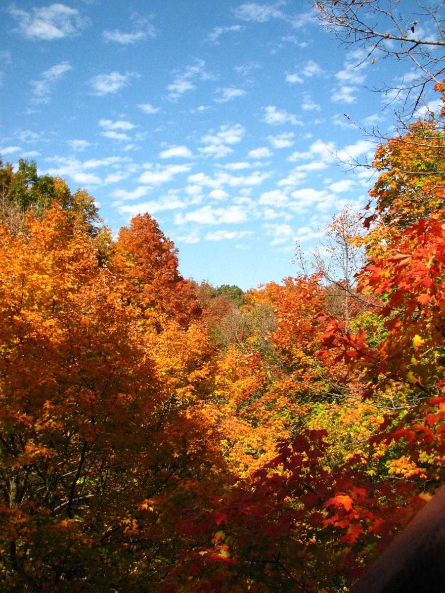 Beautiful Fall by EchoEclipsex