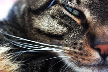 cat whispering by Nimau