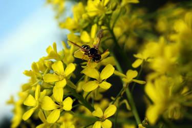 Bee smile by Nimau