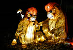 Lantern Monkeys