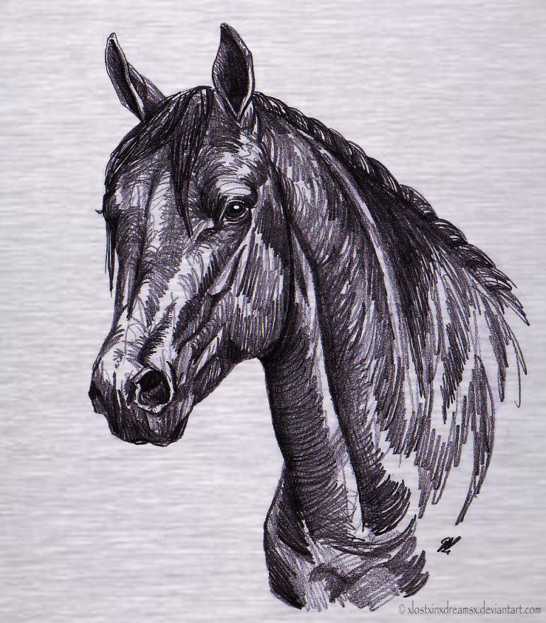quarter horse #sketch ...