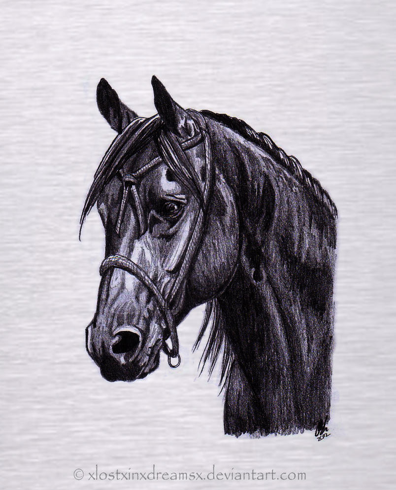 Quarter horse drawing - photo#21