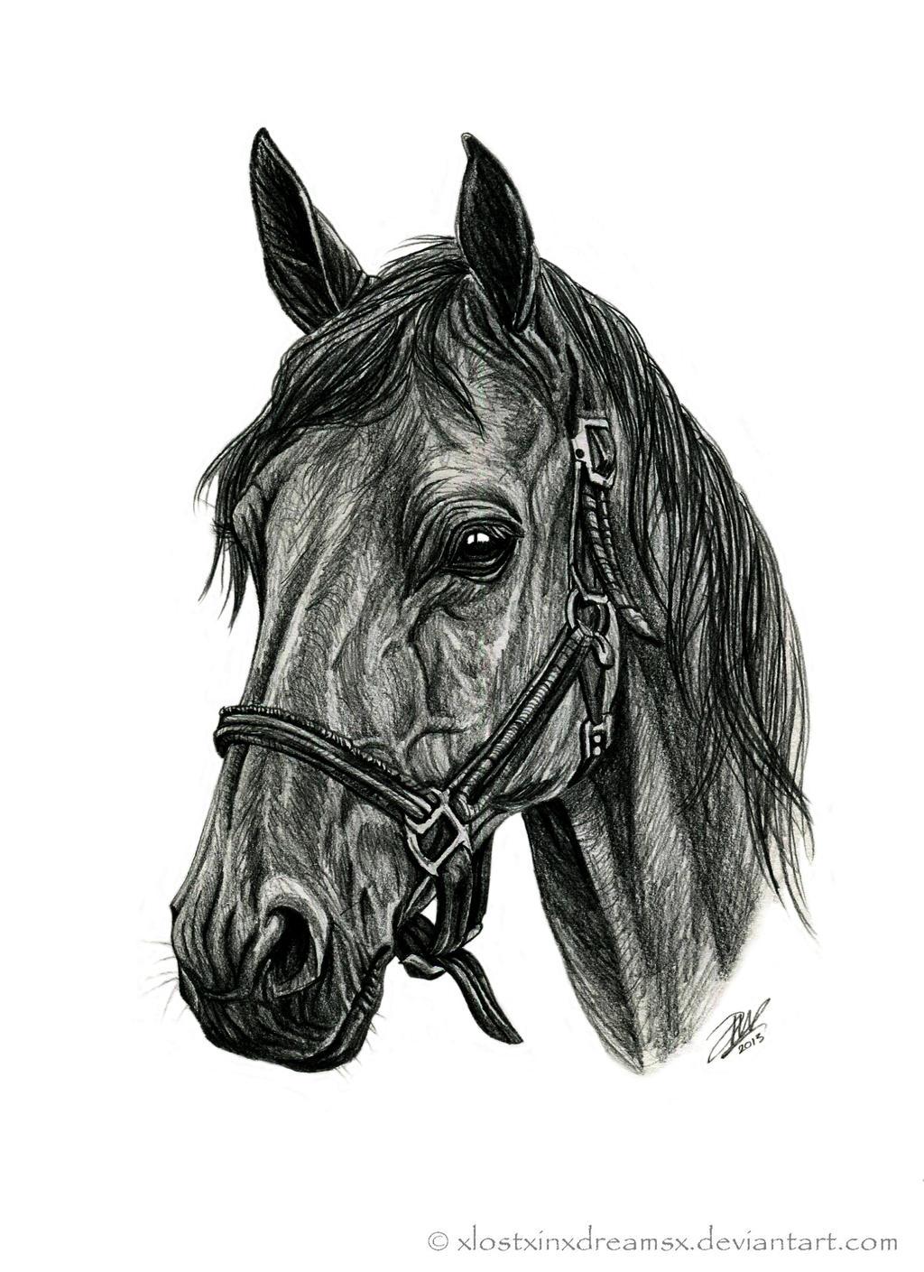 Quarter Horse by xlostxinxdreamsx on deviantART