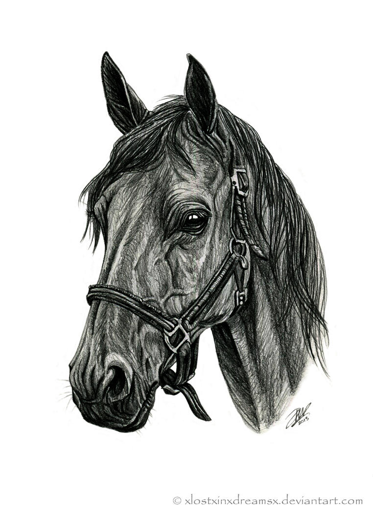Quarter Horse Head Drawing