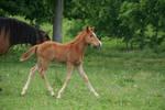 Foal Stock 2