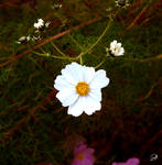 the white one by AnnieFF5