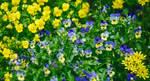 garden of summer by AnnieFF5