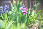 chariots of spring