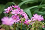 garden of pink
