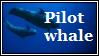 Pilot Whale by LackToastAndToleranc