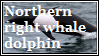 northern right whale by LackToastAndToleranc